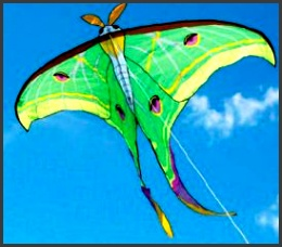 the luna moth kite is a superb example of kite design imitating the beautiful insects of our world