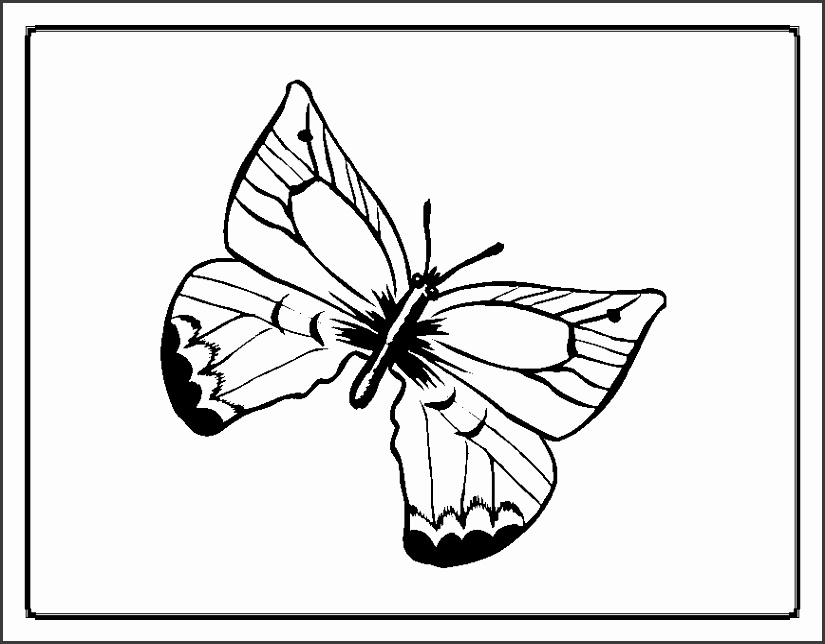 Butterfly Coloring Pages 30 High Definition Wallpapers