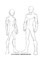 Anime Body Template Male