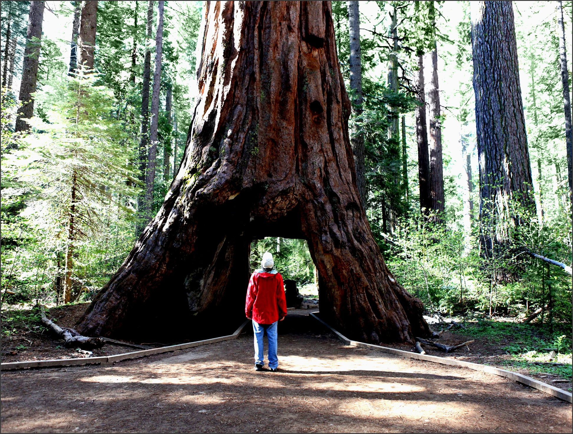 camping in northern california how to plan the perfect trip condà nast traveler
