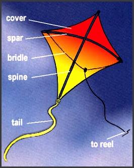 play kite anatomy