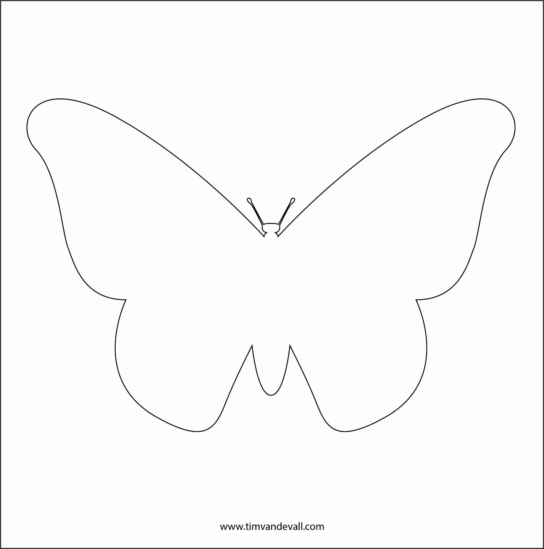 monarch butterfly stencil butterfly outline