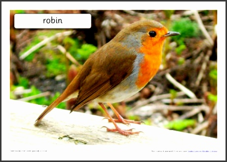 British Birds Set SB4188