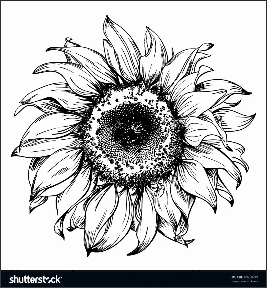 7 Sunflower Black and White Template - SampleTemplatess ...